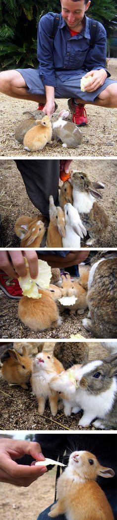 cool-bunny-island-Okunoshima-Japan-lettuce