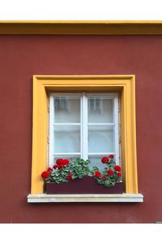 Window Box With Red Geraniums Window Boxes, Window Sill, Red Geraniums, Best Windows, Outdoor Spaces, Cool Pictures, Backdrops, Exterior, Kerb Appeal