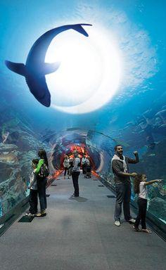 #Dubai_Aquarium #Dubai - #UAE http://en.directrooms.com/hotels/subregion/3-17-87/