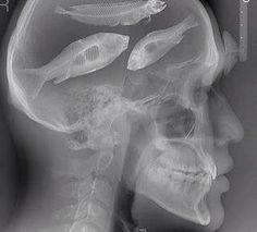 Fishin always on my mind!