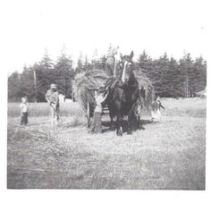 Hay gathering in Annapolis Valley, Nova Scotia by my grandfather and cousins