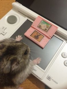 howcanidescribemylife:Mochi plays Nintendogs on the DS