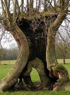 Old Witchcraft | old trees # wiccan # sacred # nature