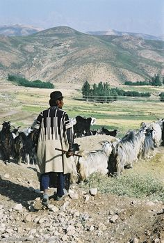 The mountain ranges of Zagros, in western Iran, are mainly inhabited by nomadic tribes.  Bakhtiari shepherds, if they can, set up villages among the mountains: kind of shepherd centers, from which the families go out on two or three months-long grazing expeditions in the surrounding mountains __ photo by Mirjam Terpstra.
