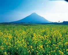 薩摩半島をぐるっと満喫!指宿・早春の絶景ドライブスポット【鹿児島】