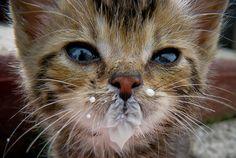 kitten with milk on its face