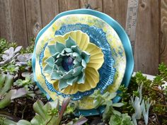 Drought Resistant Plate Flower ~ Sarah's Country Kitchen ~