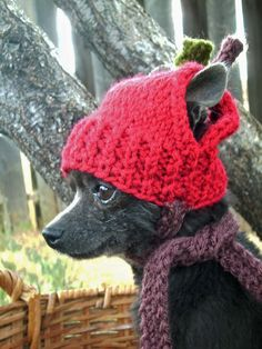 Tuggie needs this on days like this!    RED APPLE Hand Knit Dog hat Photo Prop by anywear on Etsy, $22.00