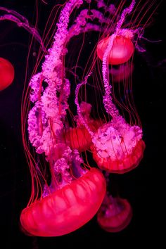 Jellyfishes by jmhuttun, via Flickr (hehehe! the color of my hair right now!)
