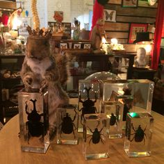 Taxidermied squirrel and beetles in Lucite. Available at Paris on Ponce in the Absinthe Vignette