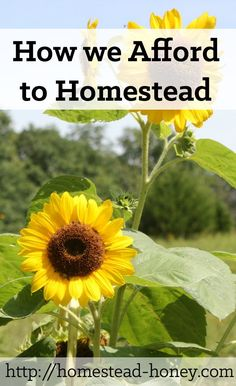 How we afford to homestead (on less than one income) is a combination of three factors: Avoiding debt, reducing expenses, and creating a diverse income stream   Homestead Honey