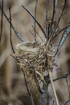 Empty Nest by Bradley Clay