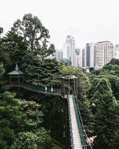 """879 Me gusta, 34 comentarios - Jacintha Verdegaal (@urbanpixxels) en Instagram: """"A forest in a city: welcome to Kuala Lumpur 🌳 My body is seriously confused right now. Yesterday I…"""""""