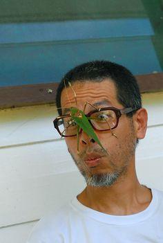 Boneo, Poring: giant katydid by Wilson Yang, via Flickr