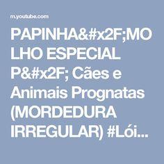 PAPINHA/MOLHO ESPECIAL P/ Cães e Animais Prognatas (MORDEDURA IRREGULAR) #LóiPor31Dias 27 Lói Cúrcio - YouTube