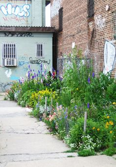 Goodbye, Gowanus:  After 15 Years, a Brooklyn Sidewalk Gardener is Ready to Pull Up Roots: Gardenista