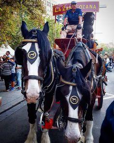 El coche de caballos de @cervezasambar  #diariodeuninstagramer