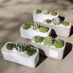 "Succulent ""Thank You"" arrangements by Dalla Vita located in Santa Barbara"