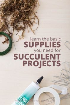 Your next succulent project will go more smoothly with the right supplies on hand!