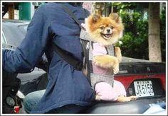 Dog Backpack #pets trendhunter.com