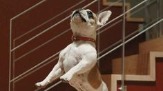 """Or jump very high... 
