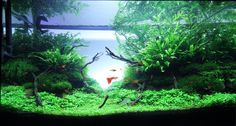 Layout by Chevaquine. #aquascaping
