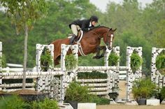 my absolute favorite jump, the white birch rails are so sharp! Classic hunter derby fence