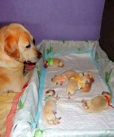 Watching over the little ones.