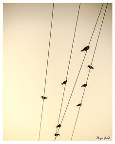 Birds on a wire minimalist photography print 8x10 by hayagold, $12.00