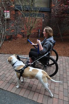 When using a dog walking arm accessory, do NOT attach the tether to the dog's collar. Always attach it to a harness as shown. Dog Wheelchair, Wheelchair Accessories, Mobility Aids, Old Dogs, Service Dogs, Dog Leash, Happy Dogs, Dog Walking, Dog Care