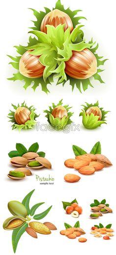 Green nuts vector