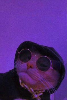 Funny Cat Wallpaper, Hippie Wallpaper, Cute Cat Wallpaper, Purple Wallpaper Iphone, Cartoon Wallpaper, Cute Baby Cats, Cute Funny Animals, Cute Baby Animals, Funny Cats
