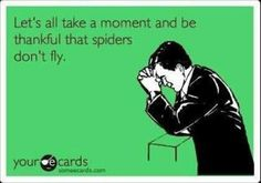 I am sooooo happy that spiders can't fly, they are scary enough as it is.