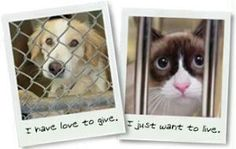 #animals #adopt #dogs #cats #pets #rescue #shelters #save #foster #homes