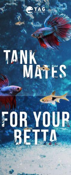 Beware Fish House Sign Pond Aquarium Tank Bowl Plaque Top Watermelons Pet Supplies Fish & Aquariums