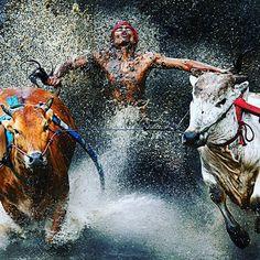 Reto 5. Fotografía publicada por el fotógrafo Wei Seng Chen. En ella se muestra una increíble fotografía de un deportista participando en una de las pruebas más extremas de uno de los deportes más peligrosos: el trineo sobre toros. #RetoVisual0911 #CA0911