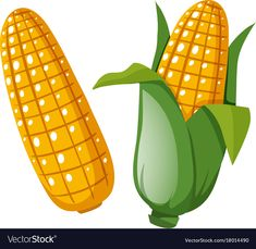 Fresh corn on the cobs vector image on VectorStock Projects For Kids, Art Projects, Popcorn Seeds, Mesh Tool, Cartoon Butterfly, Good Notes, Stone Painting, Art Images, Character Design