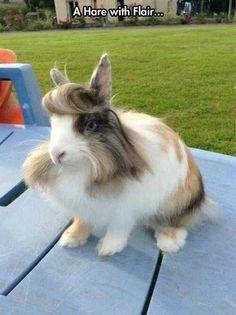 too furry too fabulous