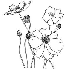 Easy to draw flowers how to draw poppy step 5 for details penny black poppies rubber stamp overstock shopping the best deals on wood stamps mightylinksfo