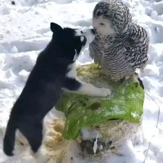 Cute Animal Videos, Funny Animal Pictures, Cute Funny Animals, Cute Baby Animals, Animals And Pets, Cute Cats, Adorable Kittens, Small Animals, Videos Of Animals