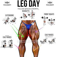 https://musclemorphsupps.com/ LEG DAY LEG EXERXISES LEG WORKOUT BODYBUILDING GYM FITNESS MUSCLEMORPH https://musclemorphsupps.com/