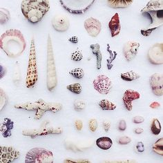 I'm missing our week off in Virginia Beach today, so I'm taking comfort in these gorgeous shells that @jengotch shared in #dshappy ❤️