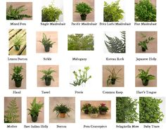 So COOL! Fern types (CLICK to enlarge)
