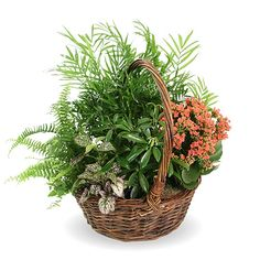 Frazer Consultants funeral home websites are easy to update, mobile-ready, and can even earn you money with our revenue-generating Tribute Store plugin. Funeral Floral Arrangements, Flower Arrangements, Green Funeral, Home Websites, Garden Basket, Tribute, Website Features, Funeral Flowers, Local Florist