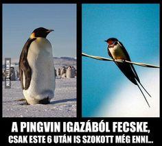 Éljenek a pingvinek! :D