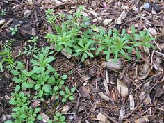 A Life Unprocessed: How To Find Edible Weeds