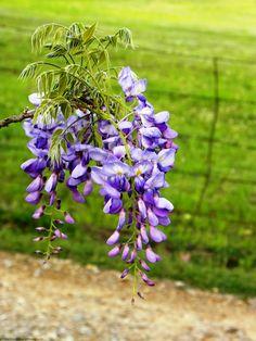 Bloom of the Week Wednesday