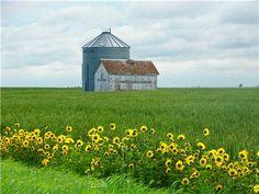 near Yellow Grass, Saskatchewan.