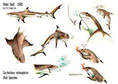 Blacktip Reef Shark - Sheet Siarc by =Culpeo-Fox on deviantART Stingray Tattoo, Cartoon Sea Animals, Reef Shark, Deviantart, Online Art Gallery, Concept Art, Character Design, Fox, Sharks