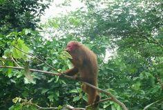 "Book #amazon_adventure_tours with Tour specialized operator ""Amazon Adventure Peru"".  To know visit at http://www.amazonadventureperu.com"